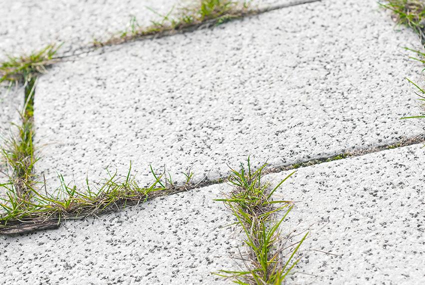 Entfernen von Unkraut auf gepflasterten Flächen
